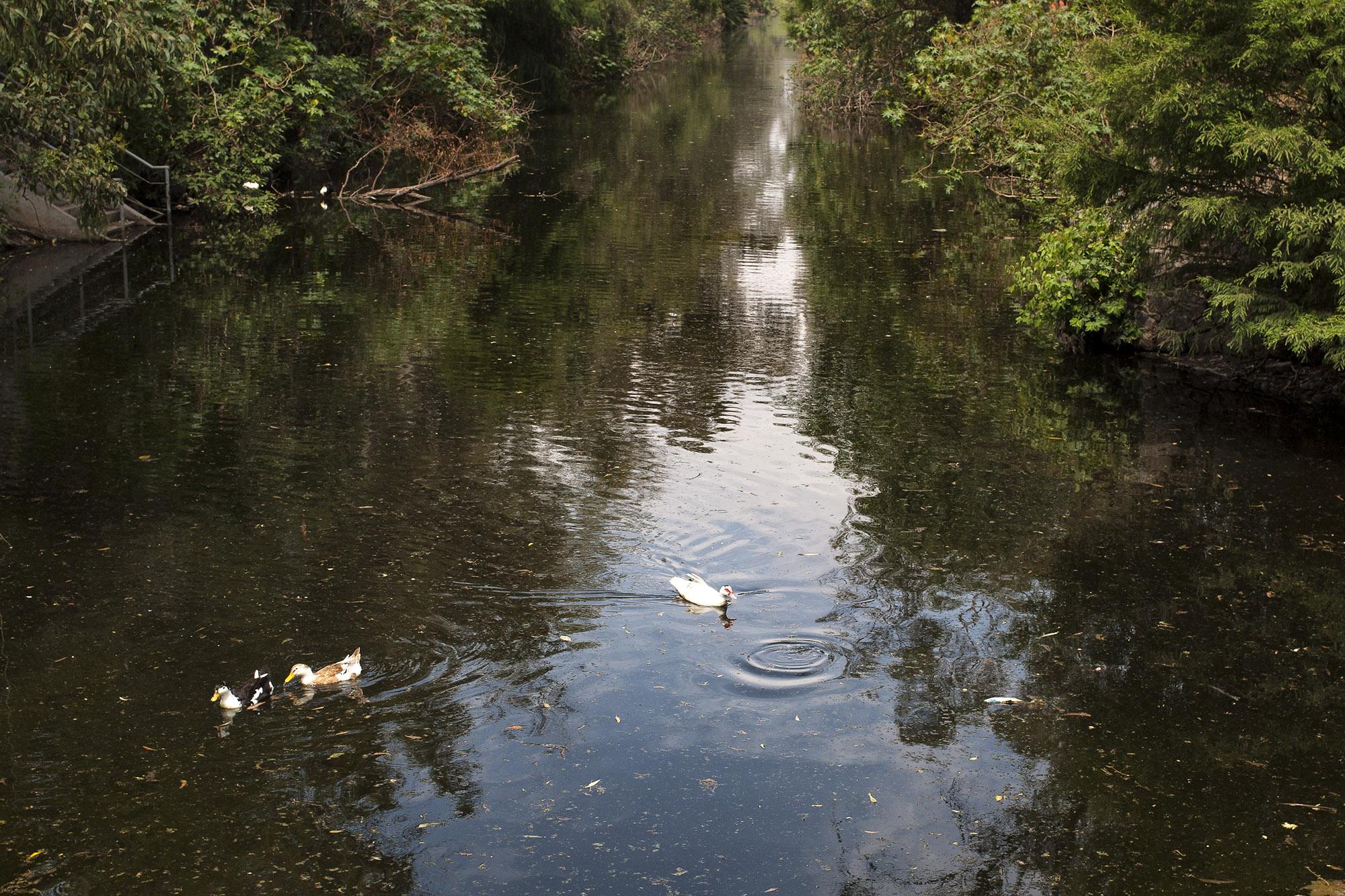 Recuperar las aguas vivas de la ciudad
