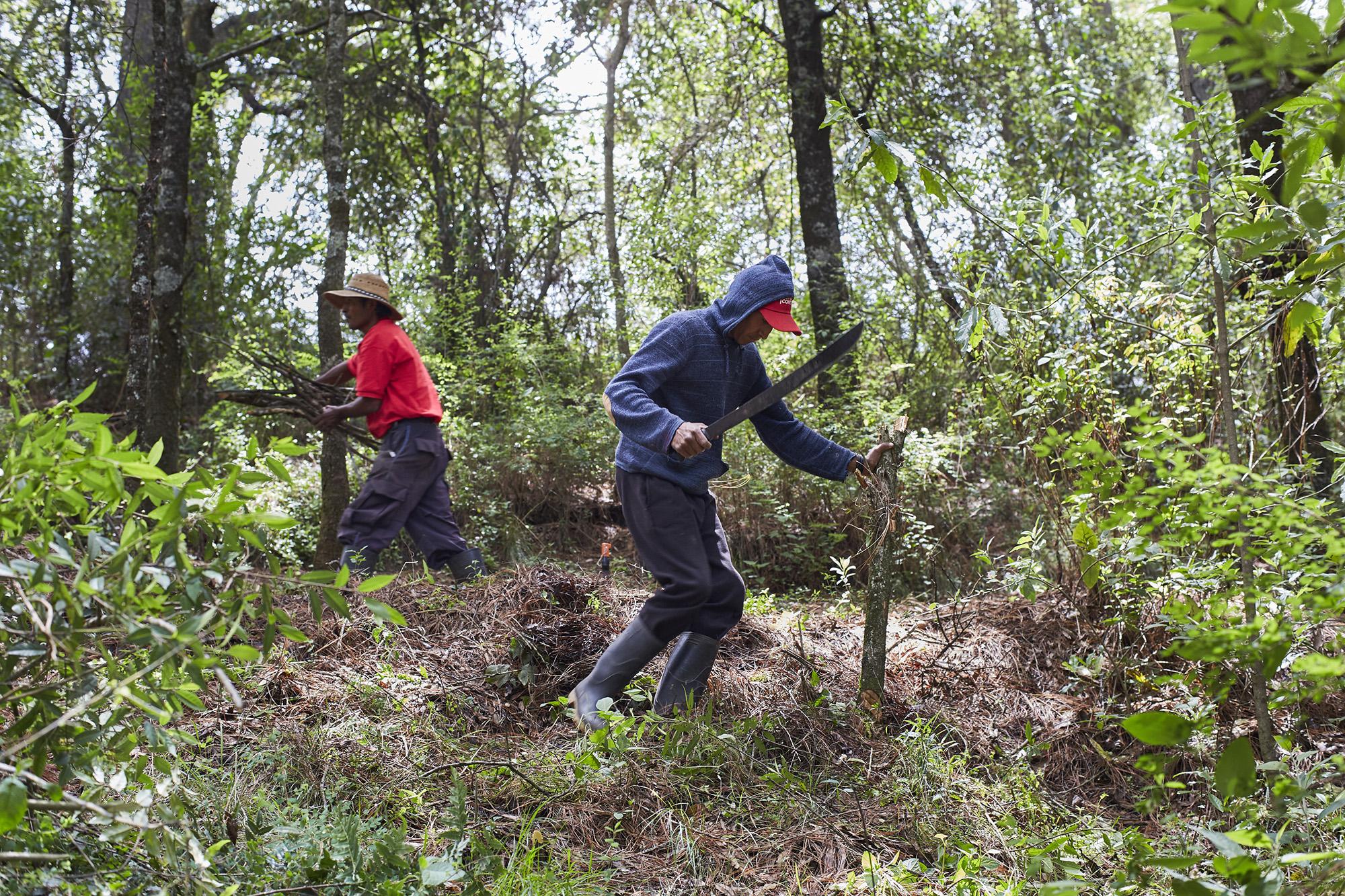 Manejo forestal comunitario en Amanalco: vivir del bosque y para el bosque